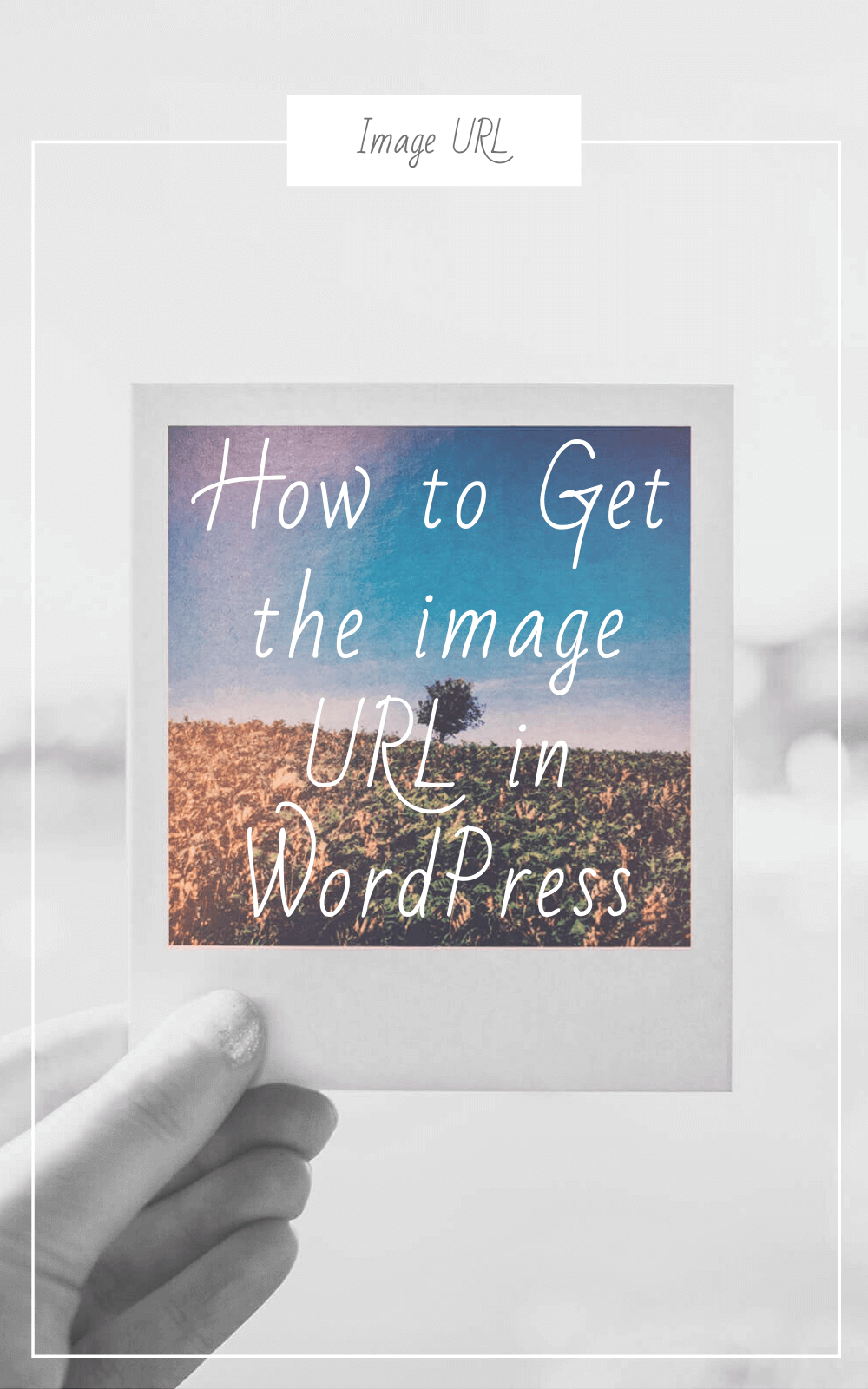 How to Get the image URL in WordPress